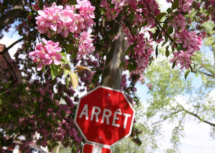 Montreal Greeting Card featuring the photograph Stop To Smell The Flowers by Frederico Borges