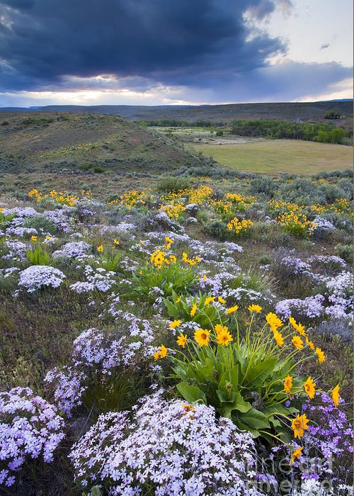 Wildflowers Greeting Card featuring the photograph Storm Over Wildflowers by Mike Dawson