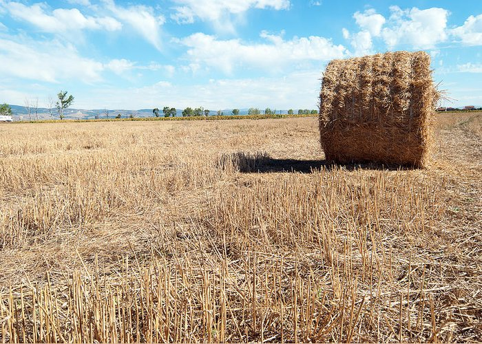 Agriculture Greeting Card featuring the photograph Straw Bales At A Stubbel Field by Svetoslav Radkov