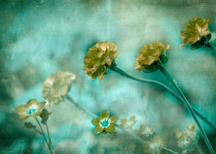 Flowers Greeting Card featuring the photograph Stretching Toward Morning by Bonnie Bruno
