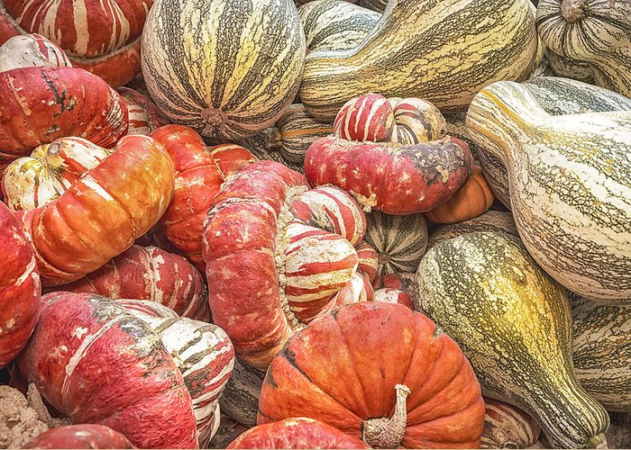 Squash Greeting Card featuring the photograph Stripes by Caitlyn Grasso
