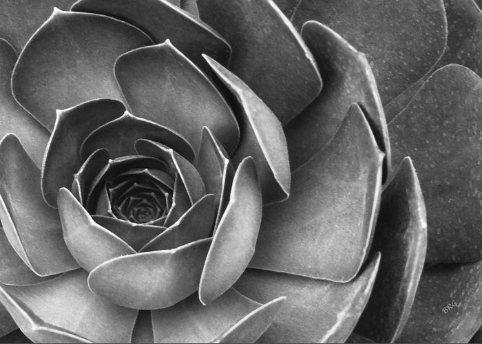 Botanical Greeting Card featuring the photograph Succulent In Black And White by Ben and Raisa Gertsberg