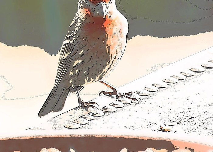 Zebra Finch Greeting Card featuring the digital art Summer Bird by Artist and Photographer Laura Wrede