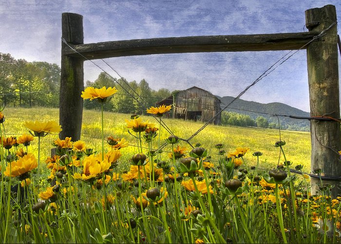American Greeting Card featuring the photograph Summer Fields by Debra and Dave Vanderlaan