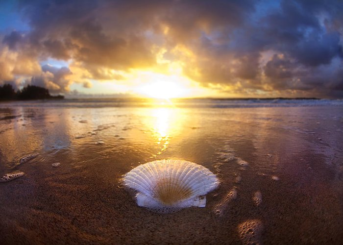Clam Greeting Card featuring the photograph Summer Solstice by Sean Davey