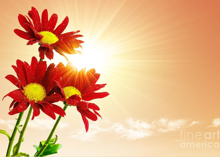 Background Greeting Card featuring the photograph Sunrays Flowers by Carlos Caetano