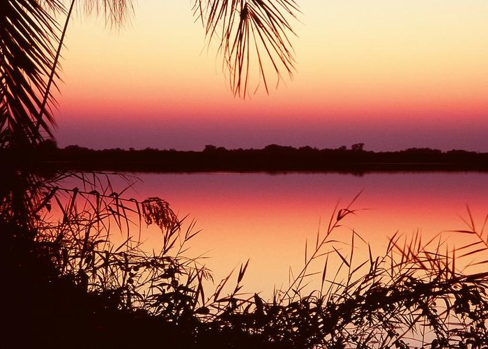 River Greeting Card featuring the photograph Sunrise On The Okavango Delta by Stefan Carpenter