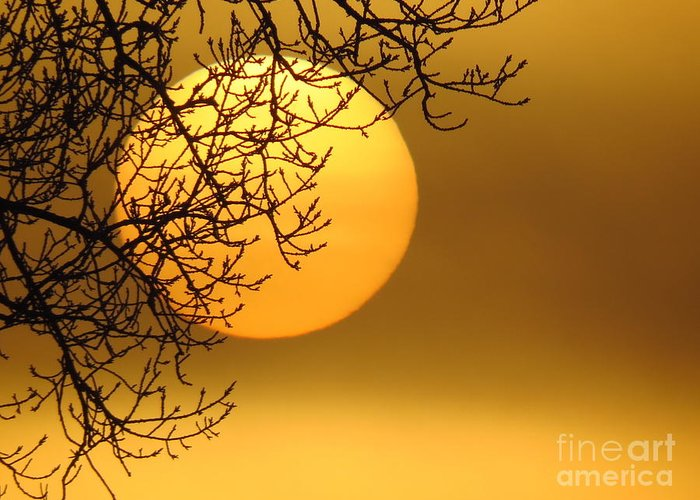 Sunrise Greeting Card featuring the photograph Sunrise Through The Fog by David Lankton