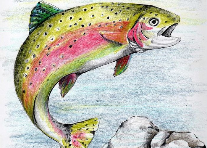 Trout Greeting Card featuring the drawing Surprised Streamer by Denise Theobald