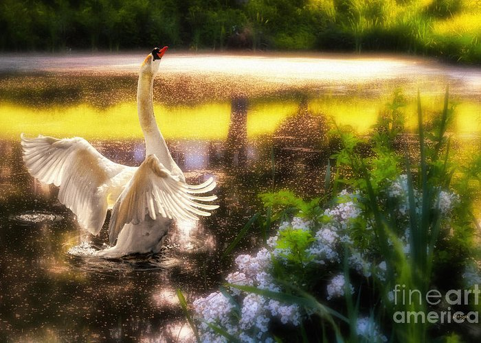Swan Greeting Card featuring the photograph Swan Lake by Lois Bryan