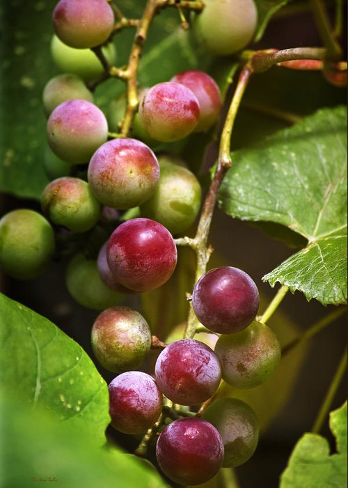 Wine Greeting Card featuring the photograph Sweet Grapes by Christina Rollo