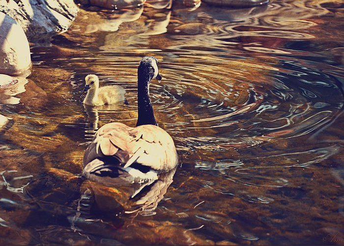 Mother Goose Greeting Card featuring the photograph Swimming With Mom by Maria Angelica Maira