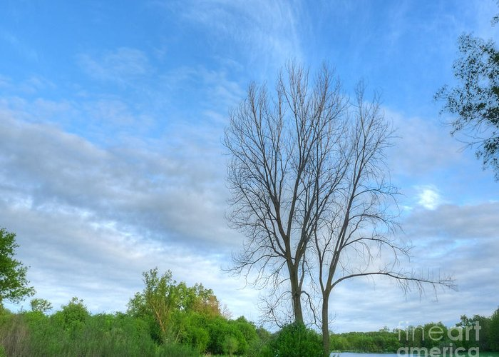Illinois Greeting Card featuring the photograph Swirly Sky And Tree by Deborah Smolinske