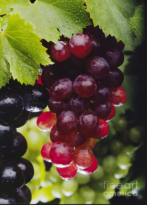 Fruit Greeting Card featuring the photograph Table Grapes Closeup by Craig Lovell