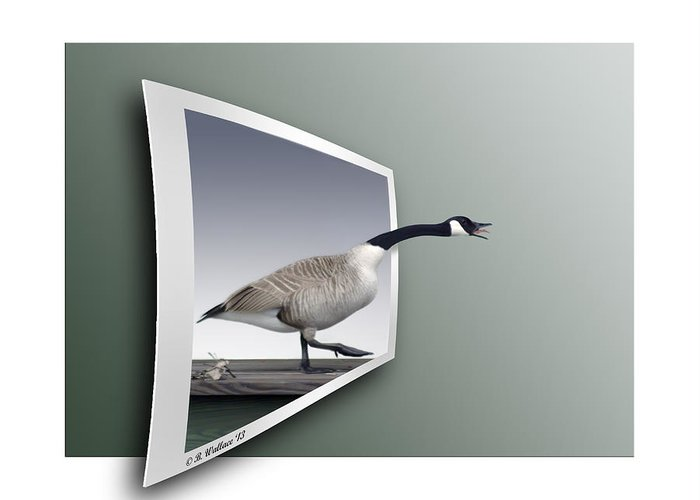 2d Greeting Card featuring the photograph Take A Gander by Brian Wallace