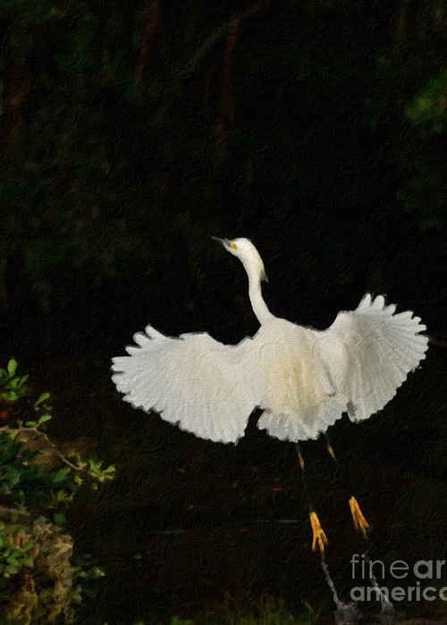 Bird Greeting Card featuring the photograph Take Off by Adrian Tavano