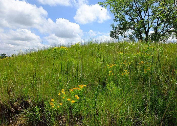 Landscapes Greeting Card featuring the photograph Tall Grass Hillside by Scott Kingery