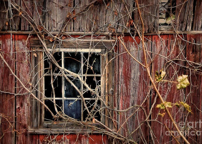Barn Greeting Card featuring the photograph Tangled Up In Time by Lois Bryan