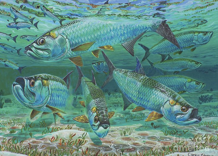 Tarpon Greeting Card featuring the painting Tarpon Rolling In0025 by Carey Chen