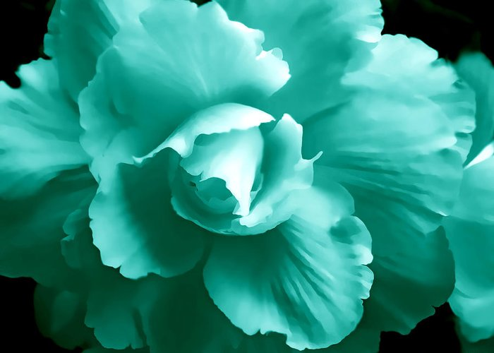 Begonia Greeting Card featuring the photograph Teal Green Begonia Floral by Jennie Marie Schell