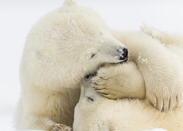 Anwr Greeting Card featuring the photograph Tender Embrace by Tim Grams
