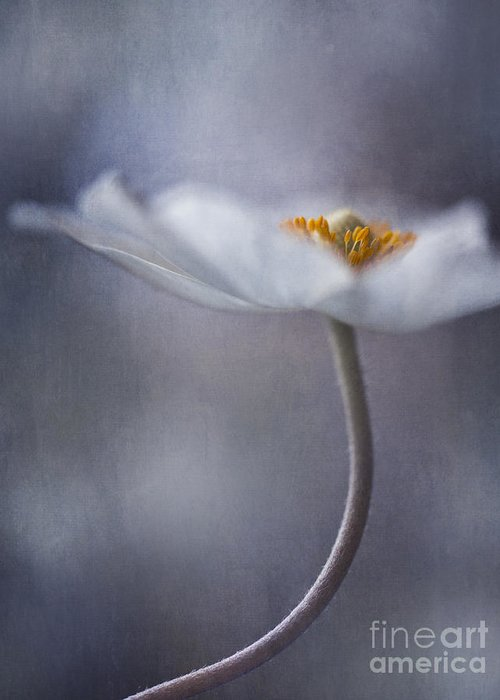 Flower Greeting Card featuring the photograph The Beauty Within by Priska Wettstein