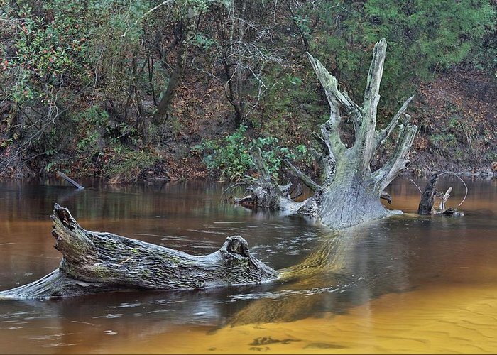 Black Water River Greeting Card featuring the photograph The Black Water River by JC Findley