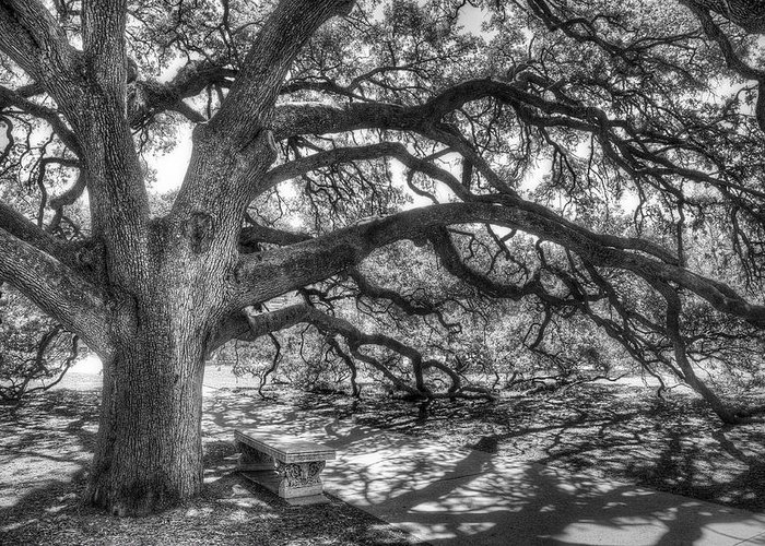 Tree Greeting Card featuring the photograph The Century Oak by Scott Norris