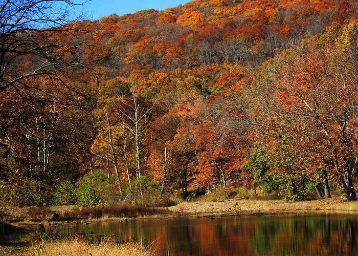 Devils Den Arkansas Fall Color Landscape  Greeting Card featuring the photograph The Color Of Fall by Billy Beasley