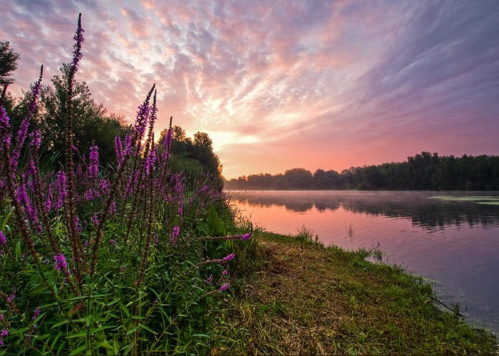 Landscapes Greeting Card featuring the photograph The Color Purple by Davorin Mance