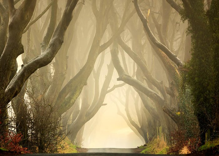 Beech Greeting Card featuring the photograph The Dark Hedges 2011 by Pawel Klarecki