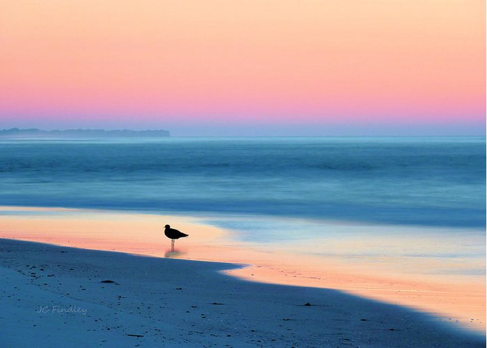 Beach Greeting Card featuring the photograph The Day Begins by JC Findley