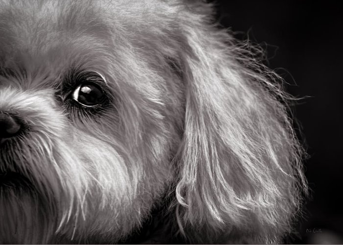 Dog Greeting Card featuring the photograph The Dog Next Door by Bob Orsillo