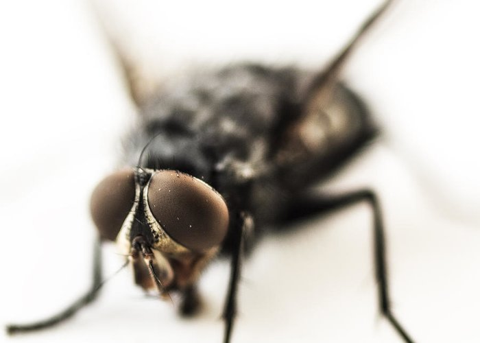 The Fly Greeting Card featuring the photograph The Fly by Marco Oliveira