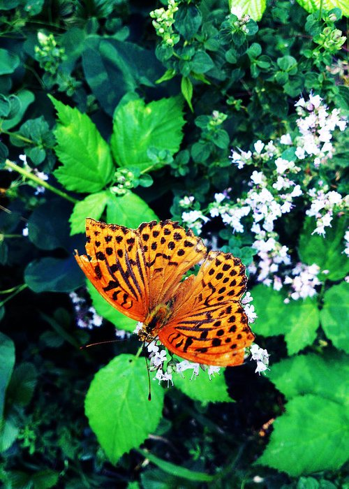 Butterfly Greeting Card featuring the photograph The Forest Guardian 2 by Lucy D