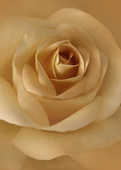 Rose Greeting Card featuring the photograph The Golden Rose Flower by Jennie Marie Schell