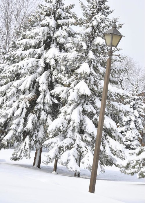 Snow Greeting Card featuring the photograph The Lamp And The Tree by Frederico Borges