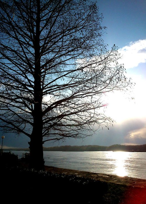 Tree Greeting Card featuring the photograph The Lonely Tree by Lucy D