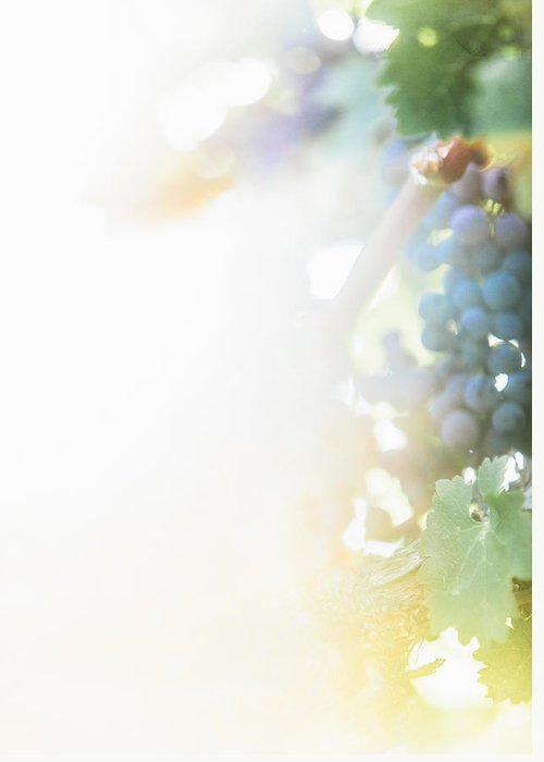 Fine Art Greeting Card featuring the photograph The Modern Grape 3 by Clint Brewer