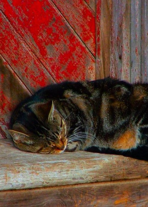 Cats Greeting Card featuring the photograph The Old Mill Cat by Julie Dant