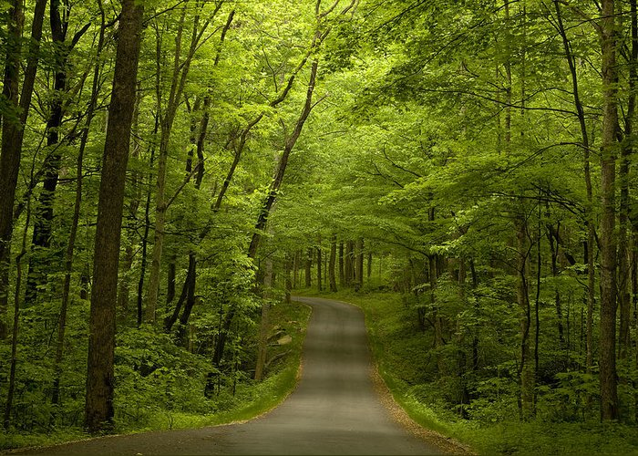 Road Greeting Card featuring the photograph The Road Less Travelled by Andrew Soundarajan