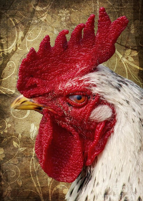 Rooster Greeting Card featuring the photograph The Rooster by Angela Doelling AD DESIGN Photo and PhotoArt