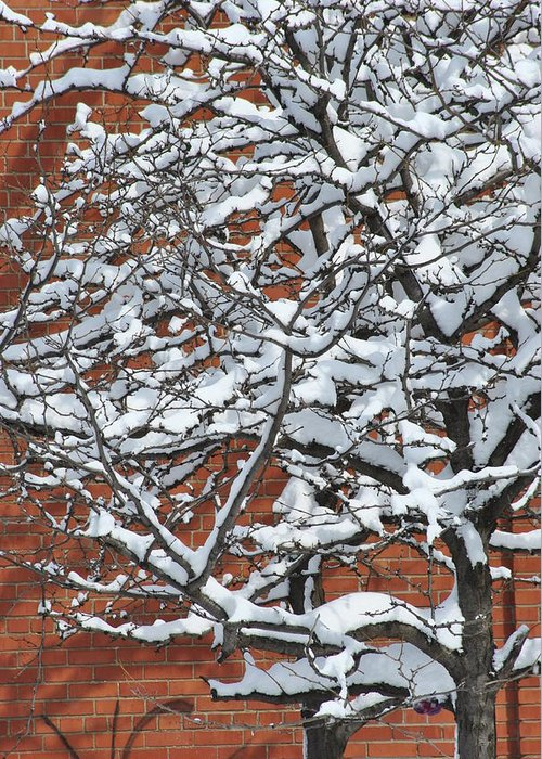 Snow Greeting Card featuring the photograph The Snow And The Wall by Frederico Borges