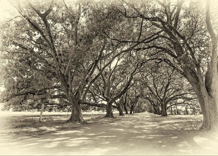 Evergreen Plantation Greeting Card featuring the photograph The Southern Way Sepia by Steve Harrington