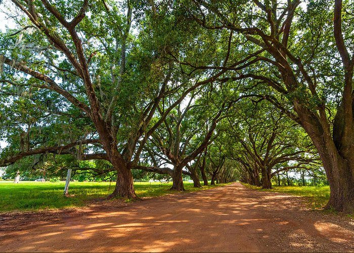 Evergreen Plantation Greeting Card featuring the photograph The Southern Way by Steve Harrington