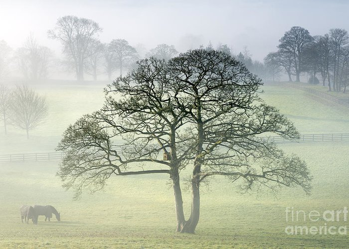 Landscape Greeting Card featuring the photograph The Vale Of York From Crayke by John Potter