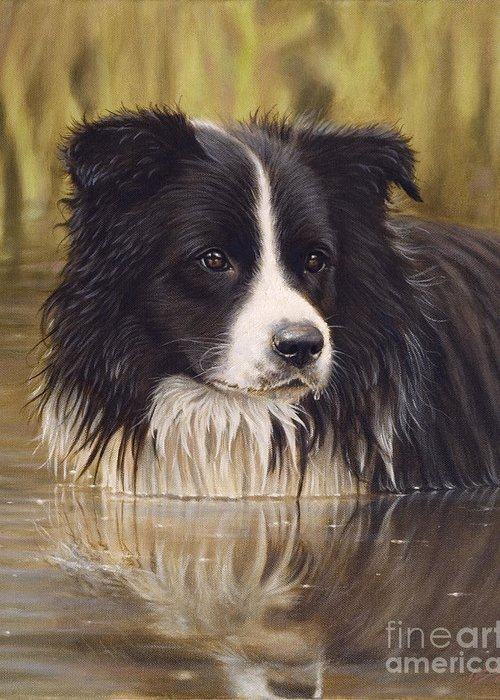 Dog Paintings Greeting Card featuring the painting The Water Baby by John Silver