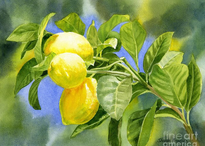 Lemons Greeting Card featuring the painting Three Lemons by Sharon Freeman