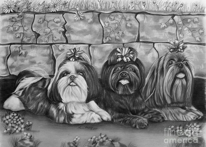Shih Tzu Greeting Card featuring the drawing Three Little Shih Tzus by Lena Auxier