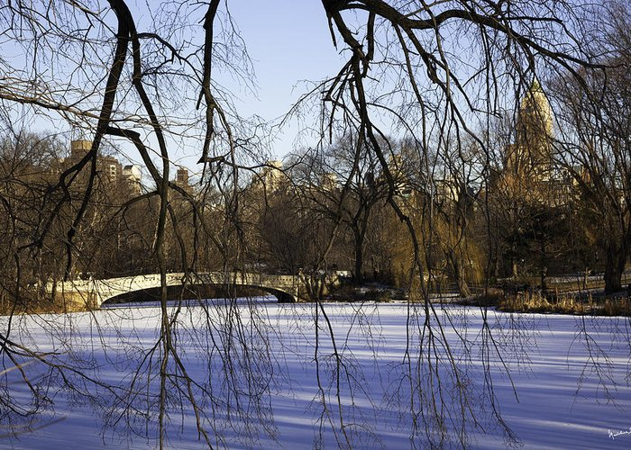 Bridge Greeting Card featuring the photograph Through The Branches 1 - Central Park - Nyc by Madeline Ellis
